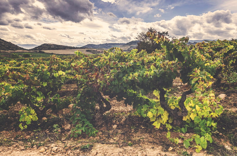 Viñedos Bodegas Tritium DO Calificada La Rioja