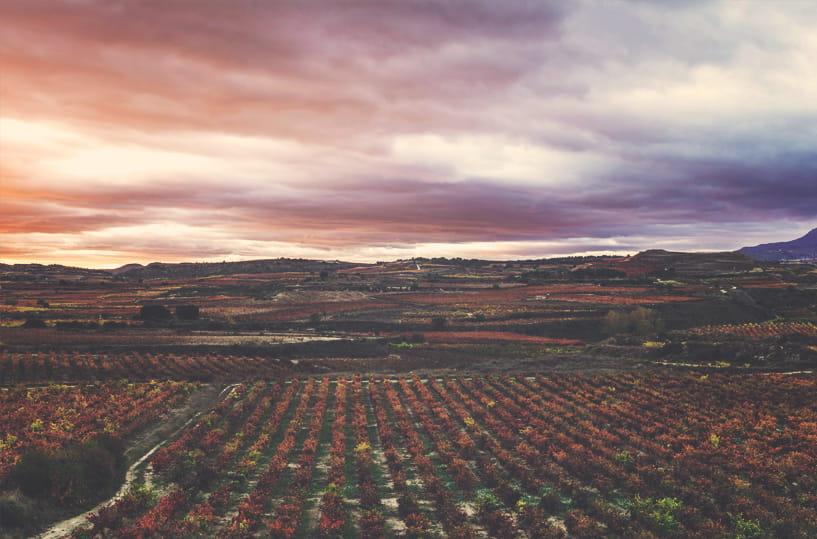 Paisaje viñedos Bodegas Tritium